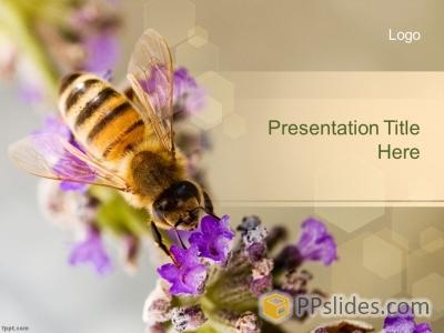 Шаблон презентации 116